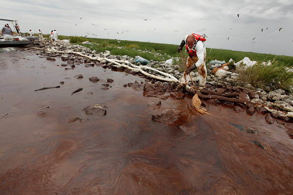 A clean-up worker picks up blobs of oil with absorbent snare on Queen Bess Island at the mouth of Barataria Bay near the Gulf of Mexico in Plaquemines Parish, La., Friday, June 4, 2010. (AP Photo/Gerald Herbert)