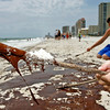 Gregory Dawkins, 10 from Leeds, Ala., picks up a glob of oil with a stick on the beach in Gulf Shores, Ala. Friday, June 4, 2010. (AP Photo/Press-Register, Bill Starling)