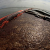 A bird flies over oil trapped in booms at Cat Island in Barataria Bay off the Louisiana Coast Friday, June 4, 2010. (AP Photo/Charlie Riedel)