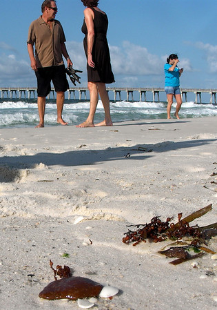 People walk amongst tar balls that lay on the beach in Pensacola Beach, Fla. on Friday, June 4, 2010. Waves of gooey tar blobs were washing ashore in growing numbers on the white sand of the Florida Panhandle Friday as a slick from the BP spill drifted closer to shore. (AP Photo/Orlando Sentinel, Kevin Spear)