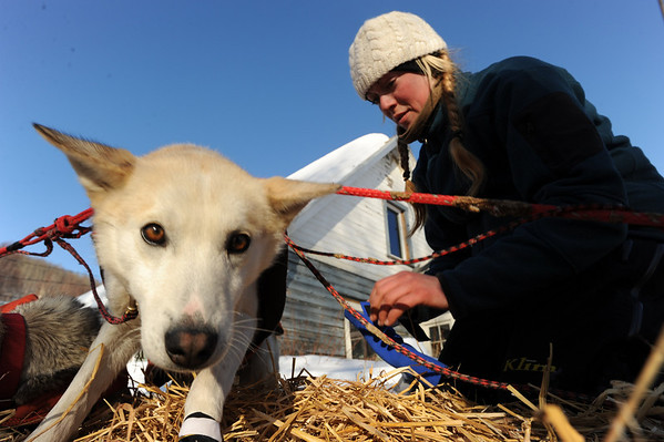 Kristy Berington, puts booties on her team as she gets ready to leave the Takotna, Alaska  checkpoint  on Thursday March 11, 2010 during the Iditarod Trail Sled Dog Race. (AP Photo/Anchorage Daily News, Bob Hallinen)