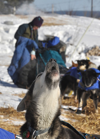 One of Cindy Gallea's leaders howls with anticipation as she gets ready to leave the  Takotna, Alaska  checkpoint  on Thursday March 11, 2010 during the Iditarod Trail Sled Dog Race. (AP Photo/Anchorage Daily News, Bob Hallinen)