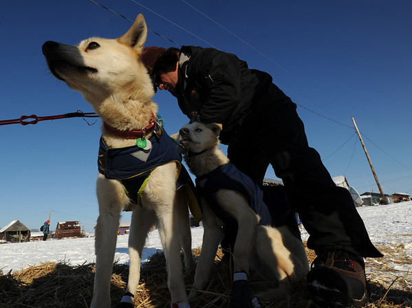 Hugh Neff booties up his team getting ready to leave the Kaltag checkpoint to cross to Unalakleet on Saturday, March 13, 2010 during the 2010 Iditarod Sled Dog Race. (AP Photo/Anchorage Daily News, Bob Hallinen)