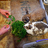In this photo taken March 18, 2010, Erin Seeherman, a visitor from Philadelphia, feeds rabbits at the Bunny Museum in Pasadena, Calif. Guinness World Records dubbed The Bunny Museum the largest in 1999 when there were only 8,437 items in the house. (AP Photo/Jae C. Hong)