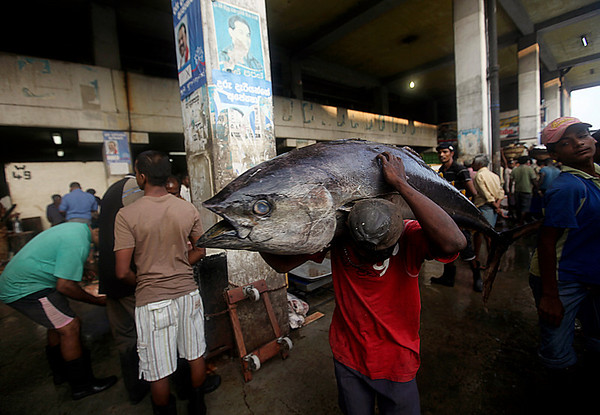 A fisherman carries a fish for sale at a market in Colombo, Sri Lanka, Wednesday, Feb. 3, 2010. (AP Photo/Rafiq Maqbool)