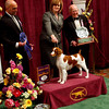 Tally, a Brittany, and her handler, Kellie Miller, accept the trophy for first place in the sporting dog group at the Westminster Kennel Club Dog Show, Tuesday, Feb. 16, 2010 in New York. (AP Photo/David Goldman)