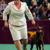 Dog_Show_NYDG114.JPG Handler Carissa DeMilta Shimpeno reacts after showing her Doberman pinscher C.J. during the working group competition at the Westminster Kennel Club Dog Show in Madison Square Garden in New York, Tuesday, Feb. 16, 2010. C.J. won the group to advance to the best in show competition. (AP Photo/David Goldman)