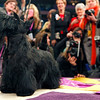 Sadie, a Scottish terrier, is photographed by the media after winning Best in Show at the Westminster Kennel Club Dog Show at Madison Square Garden in New York, Tuesday, Feb. 16, 2010. (AP Photo/David Goldman)