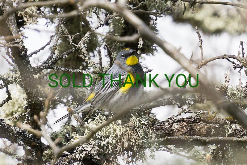 My Little Chickadee Framed Card $5