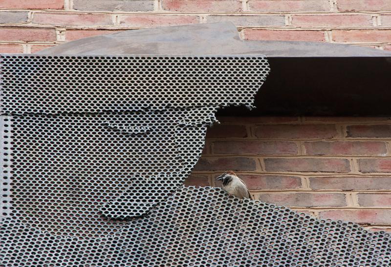 Bird conversing