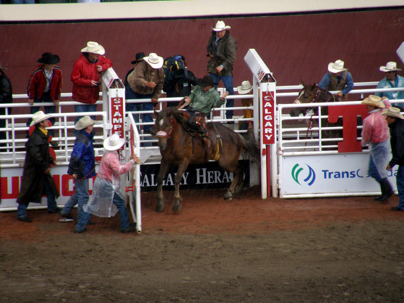The rodeo, 2009.