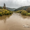 The Taieri River at Outram - logs are being swept down river like match-sticks.