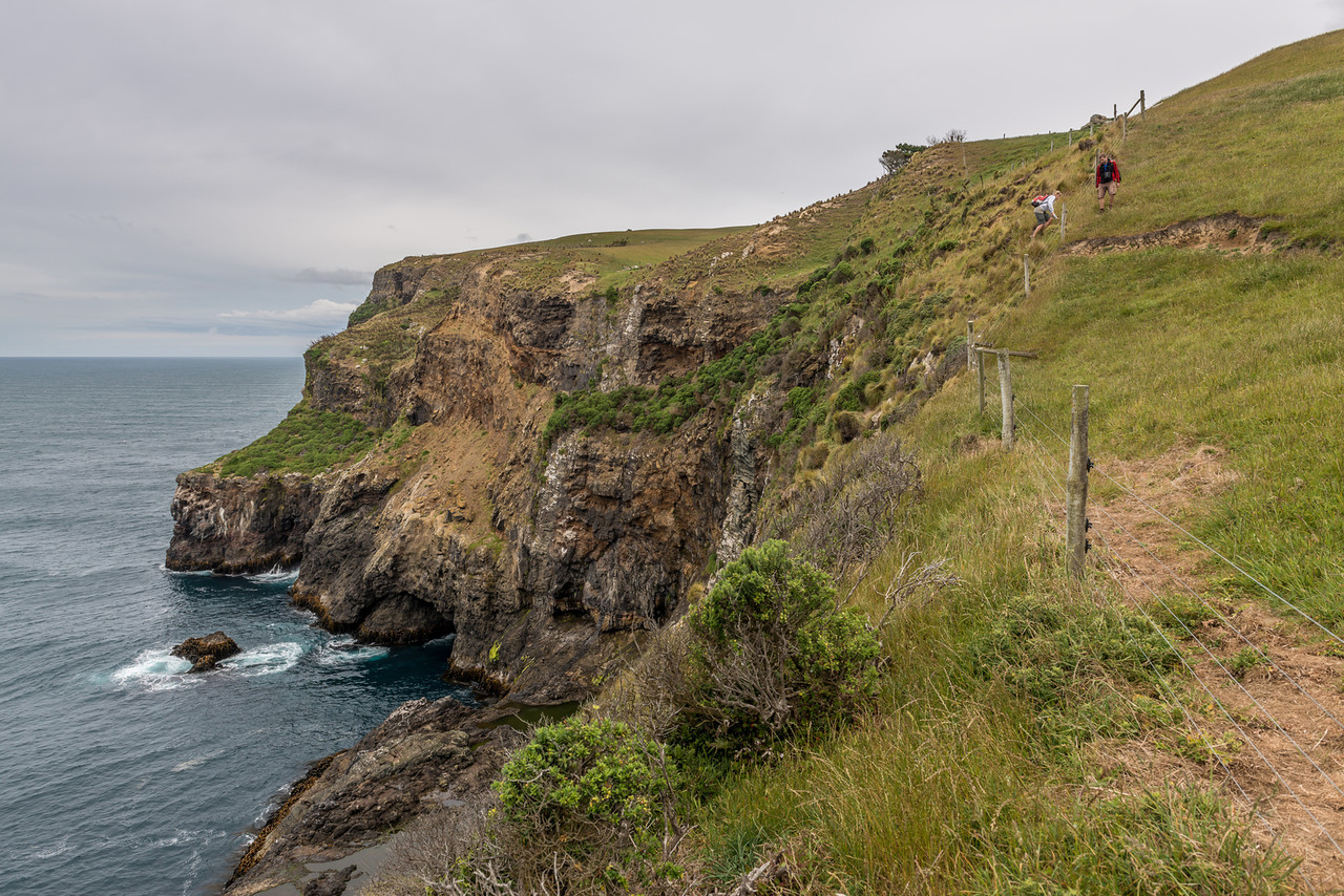 Coastal cliffs at Cape Saunders
