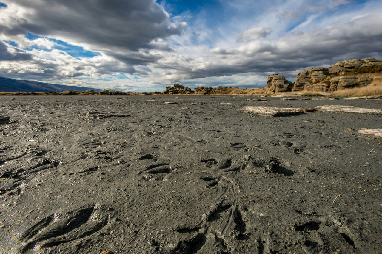 Bird foot prints in mud, Sutton Salt Lake