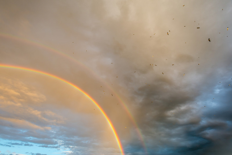 Flying above the rainbow - the seagulls no doubt were enjoying this
