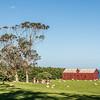 Matanaka farm buildings, Waikouaiti: stables and privvy