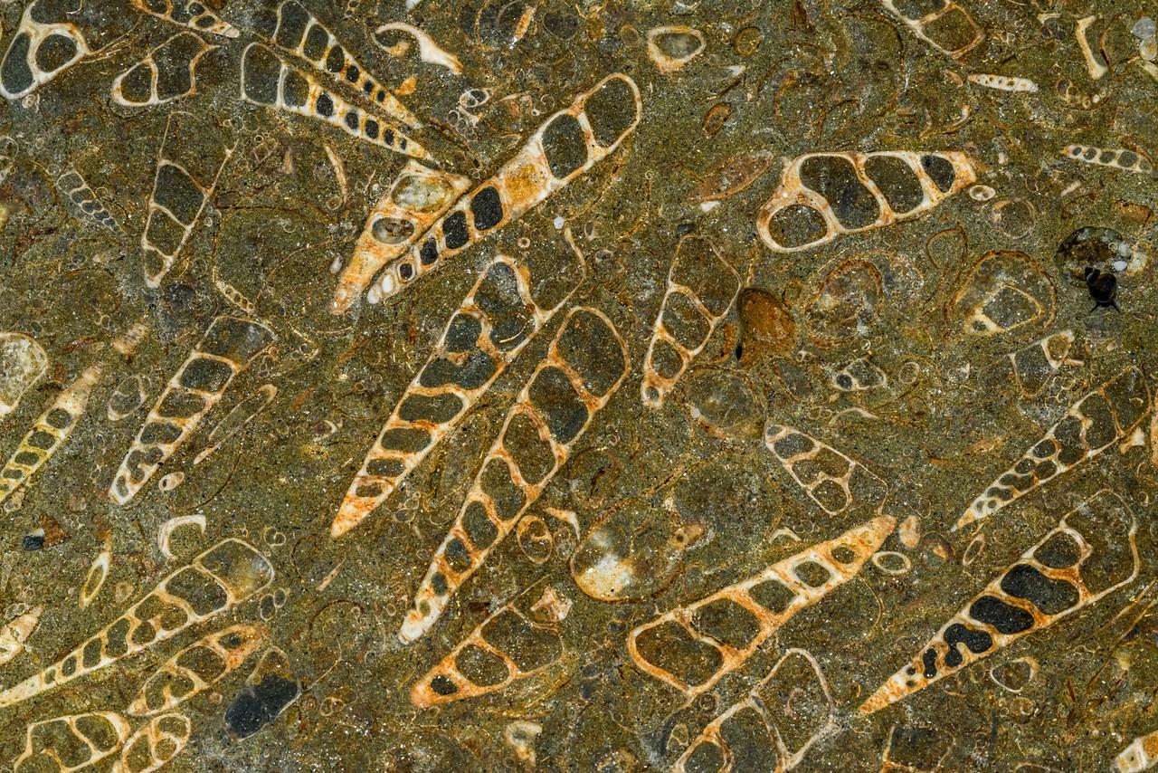 Wangaloa fossils