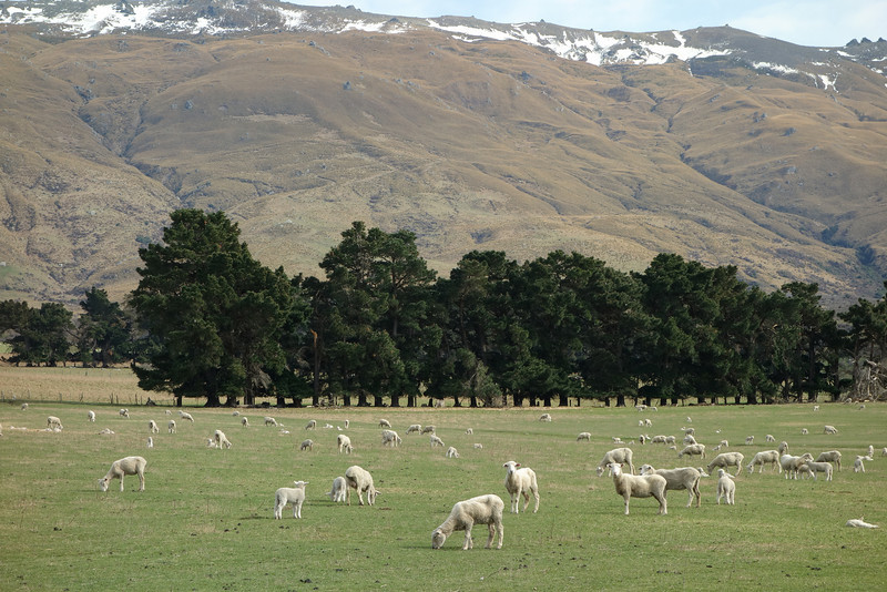 Paddocks at March Creek, Middlemarch. The Rock and Pillar Range above