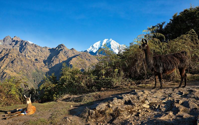 3795 Mount Salcantay