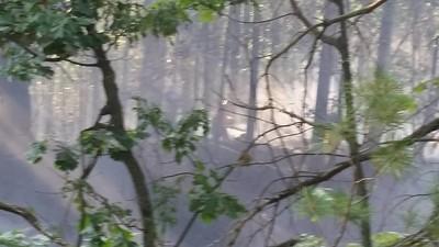 07-20-2016 Mutual Aid Leominster Brush Jungle Rd