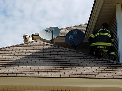 08-28-2016 Dog Rescue from Roof