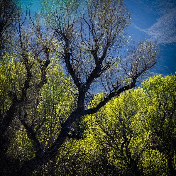 Sonoita Creek, AZ