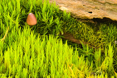 Mushroom in a moss forest