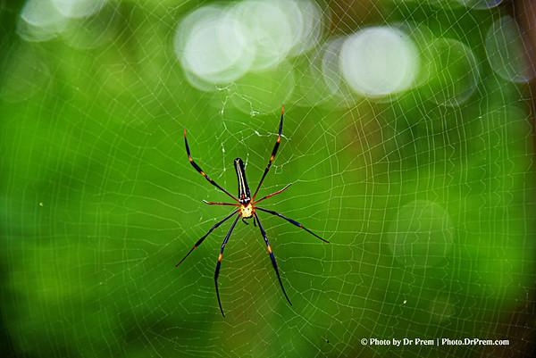 Spider with Web at Sanjay Gandhi National Park