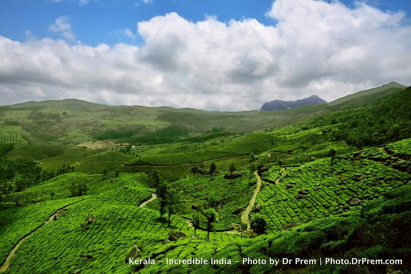 Munnar Tea Garden by Dr Prem Jagyasi.jpg