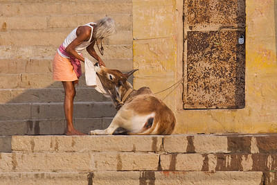 Cleaning the Cow: Varanasi