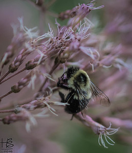 Industrious bee