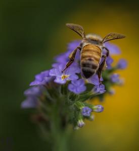 Dramatic bee