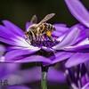 Bee working flower