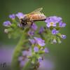 Sweet bee working flower