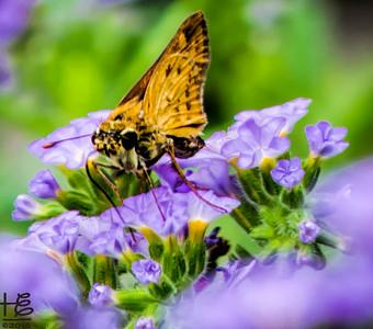 Small moth on flower