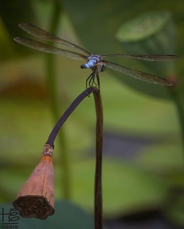 Recent Nature Photos