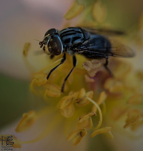 A cool fly`