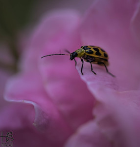Small beetle on flower