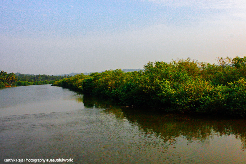 Backwaters of Goa, Mandovi River, Goa, India