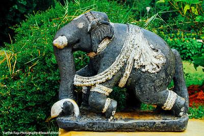 Elephant, Lalbagh Botanical Gardens, Bangalore, Karnataka