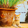 Cats of Bangalore, Karnataka