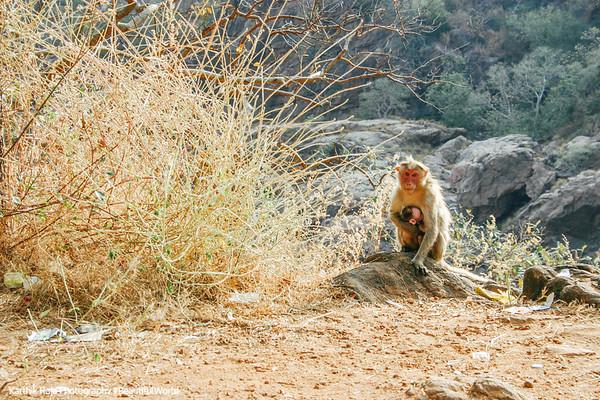 Mekedattu, Karnataka