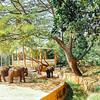 Elephant, Mysore zoo, Karnataka, India