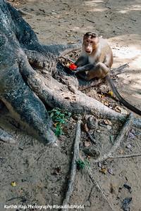 Monkey, Talakad, Karnataka, India