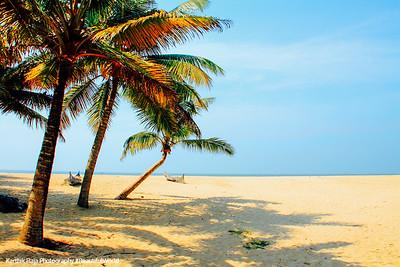 Marari beach, Coconut trees, Mararikulam, Kerala