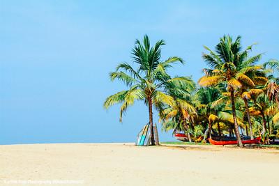 Coconut trees, Marari beach, Mararikulam, Kerala