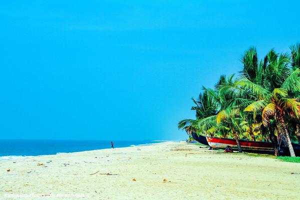 The Arabian Sea awaits, Coconut trees, Marari beach, Mararikulam, Kerala