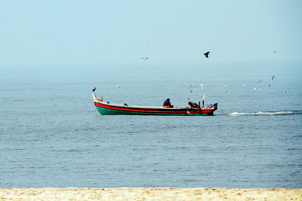 Fisherman with circling birds, Alappuzha, Kerala