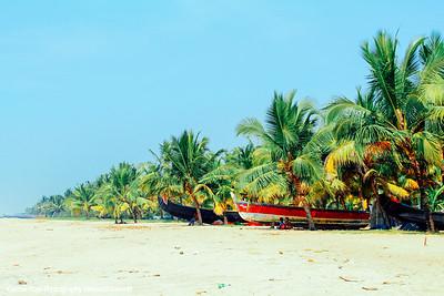 Alleppey, Coconut trees, Marari beach, Mararikulam, KeralaIndia
