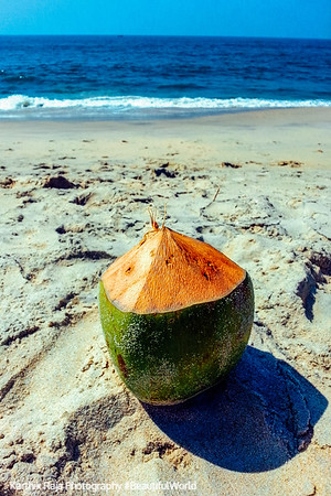 Indian Corona, Coconut water, Marari beach, Mararikulam, Kerala